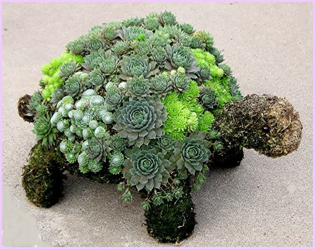 DIY Succulent Turtle Tutorial-Video