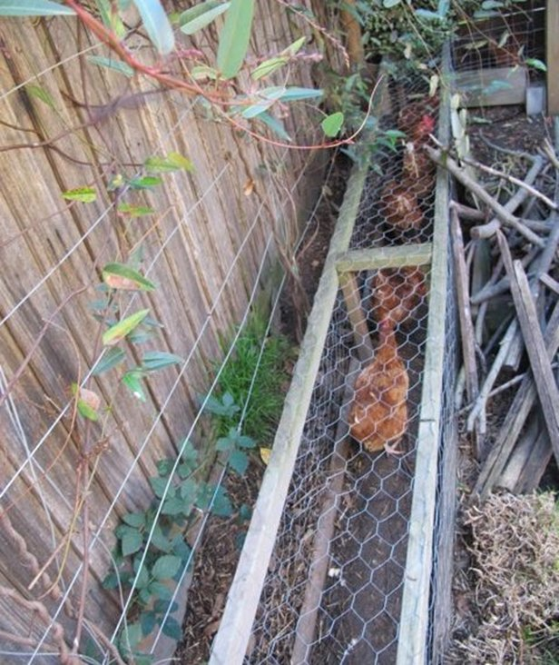 DIY Magic Backyard Chicken Tunnels Tutorials